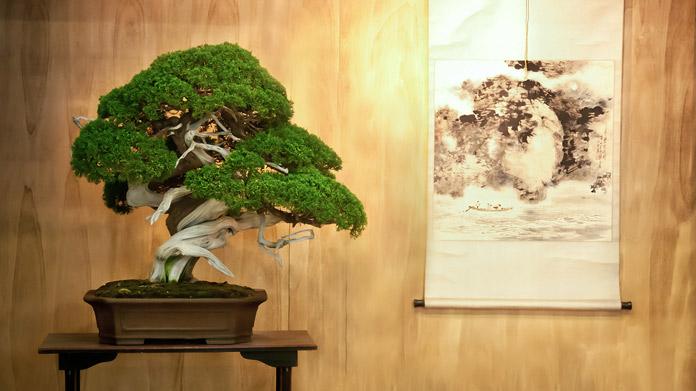 Imagen de la empresa Bonsai Tree
