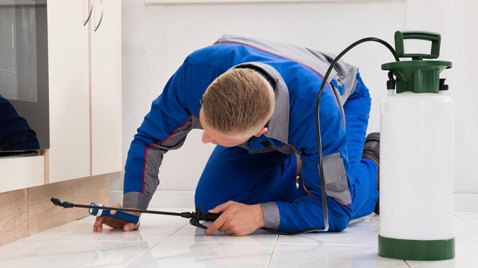 Imagen del servicio de control de plagas